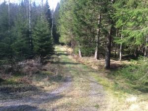 Härligt inbjudande vägar på vandringen